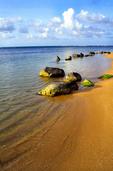 Puerto Rico, Rio Grande shoreline, near Rio Mar