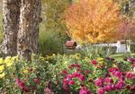 Fall garden with bird feeder