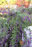Fall flowers in backyard