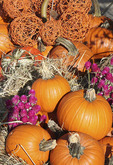 Pumpkin dispay
