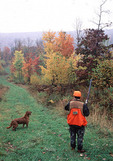 Bird hunting with dog in the Fall