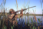 Duck hunter in the weeds of Magee Marsh
