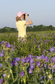 Woman Birdwatcher in Field of Spiderwort Flowers