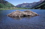 Beaver damn in a mountain lake