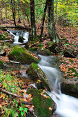 Rushing Mountain Stream, Monongahela National Forest, West Virginia