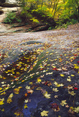 Autumn leaves litter the floor of LaSalle Canyon at Starved Rock State Park, Illinois