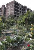 Urban or City garden