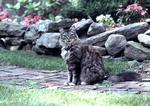 Adult cat in a yard