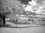 Infrared Black & White of trees in Canandaigua Lake in Finger Lakes in Upstate New York near Rochester