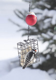 Downey woodpecker feeding at suet in winter