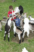 boy with goats, Tyler Stone, Friendly Farm, Dublin New Hampshire MR