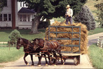 Amish farmer moving hay to the barn