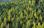Ecology of the greening of America the forests of Pacific Northwest in the state of Washington
