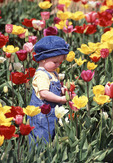 Young toddler in a field of mixed tulips