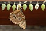 Butterfly drying itself, La Paz Waterfall Gardens