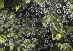 Water droplets on leaves in early morning