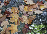 Fall still life of leaves and lichen