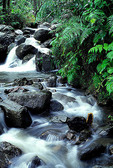 El Yunque, Caribbean National Forest, Caimatillo Stream, Puerto Rico's tropical rainforest