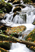 Fall color, Rushing Mountain Stream, Monongahela National Forest, West Virginia