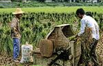 Farmers in Guilin China with Treshing Rice Machine