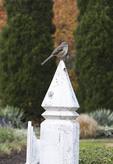 Sparrow on a fence post
