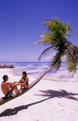 Romantic couple on leaning palm tree holding hands  in the beautiful village of La Digue in the Seychelles Islands off of Africa