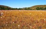 Cranberry Glades Botanical Area, Monongahela National Forest, Pocahontas County, West Virginia