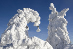 Winter snow on a  mountain peak, national park Bavarian forest, Germany,