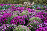 A wooden bench sits in this colorful garden setting with ornamental kale, pansies, and several varieties of chrysanthemums