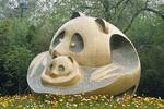 panda breeding and research center-chengdu, china april 2010
