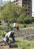 Urban garden with volunteer workers