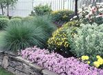 Summer garden in Ohio
