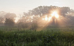 Sunbeams break through trees to light a prairie wet with dew; Midewin Tallgrass Prairie; Will County, Illinois