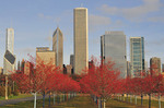 The north loop skyline as seen from the south fronted by a grove of young trees in their autumn red colors in Grant Park.