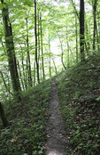 Trail in the Shawnee State Forest in southern Ohio