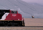 Canadian railroad in Jasper National Park, Alberta Canada