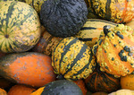 Colorful Fall gourds