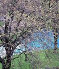 Spring in an English garden