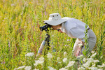 A female photographer looking through a camera taking pictures of of summer wildflowers; Nachusa Grasslands, Illinois