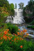 Day Lilies and Chittenango Falls, Chittenango Falls State Park, New York, USA