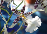 Tropical wild orchid