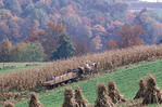Amish farmer and team of horses  harvesting a field of corn.