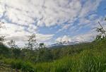 Cloud Forest, Yanayacu, Ecuador