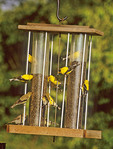 American goldfinches eating thistle at a feeder