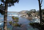 Point Lobos