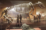 Washington DC, Smithsonian National Museum of Natural History, Hall of Dinosaurs, fossil