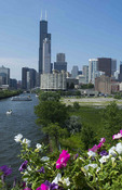 Chicago Illinois skyline from the South Chicago River branch with Sears Tower or Willis Tower in the back