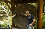 Muir Woods California above San Francisco with couple looking at 1100 year old rewood rings wonderful giant Redwoods