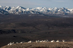Dall sheep in Denali National Park & Preserve