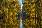 Cypress trees and moss on Lake Caddo